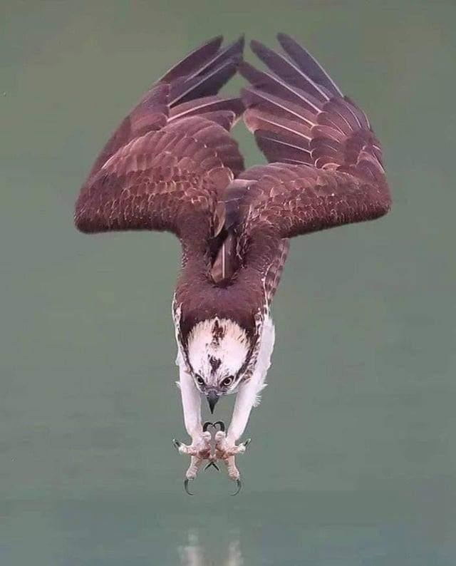 Photo of ماذا تعرف عن طائر العُقاب