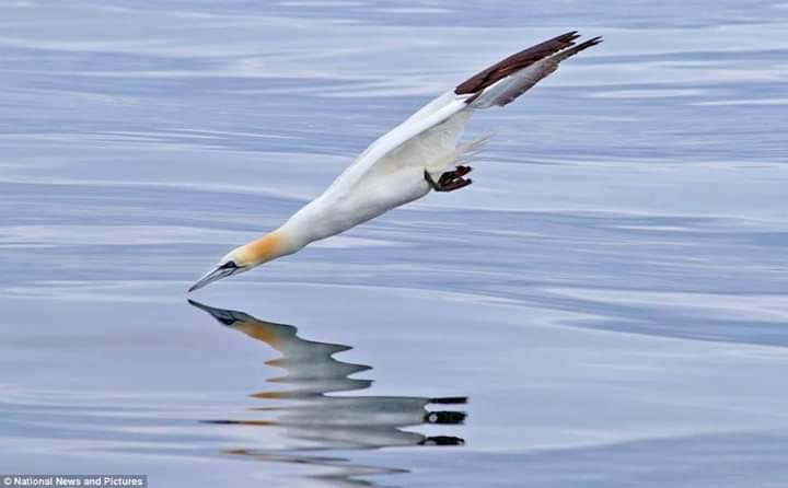 Photo of طائر الأطيش ما لم تره من قبل