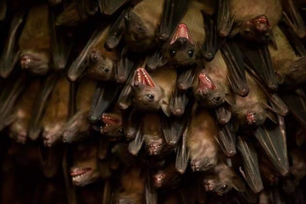 Photo of اكتشاف لغه الخفافيش