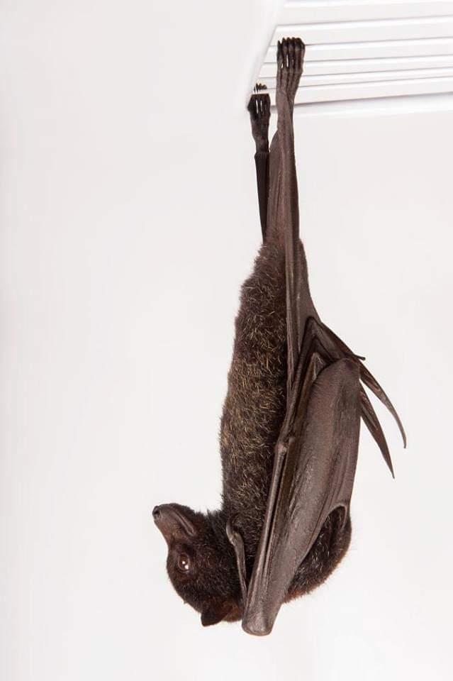 Photo of معلومات عجيبة تتعلق بالخفافيش