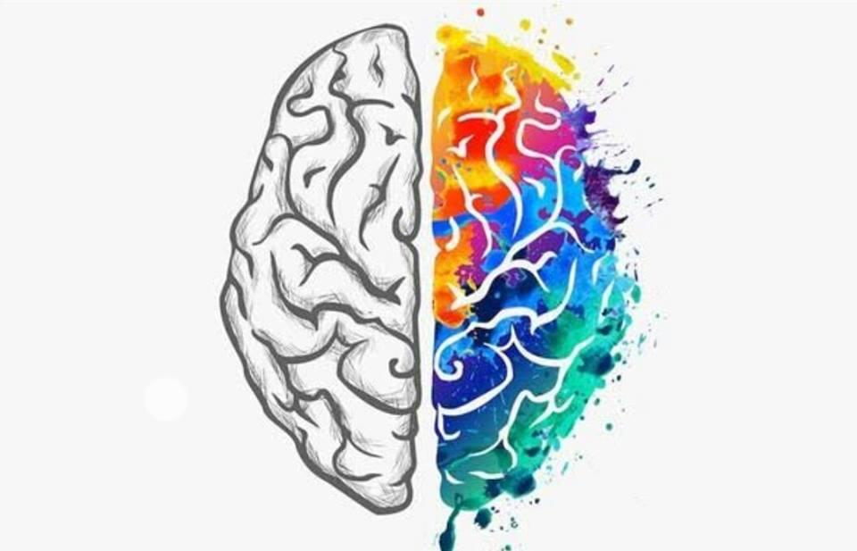 Photo of المخ البشري The human brain