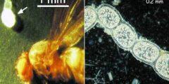 هل الحشرات بتقدر تشوف البكتيريا؟؟؟؟؟